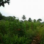 Dokumentasi Foto Lokasi Sakinah Village Bekasi